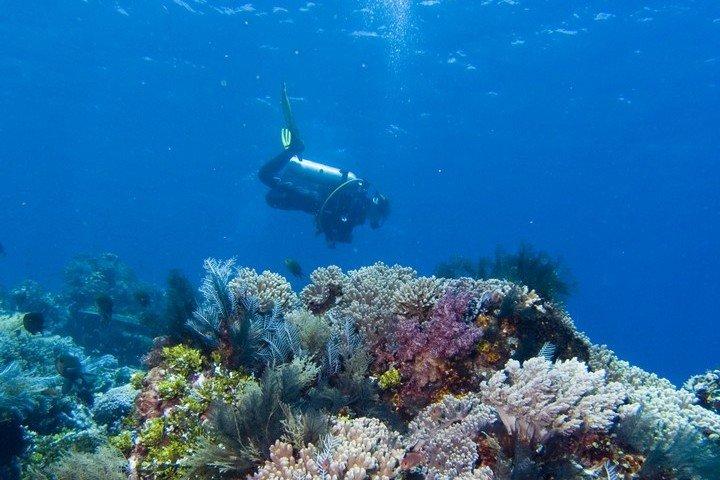 Divine diving - Duiker