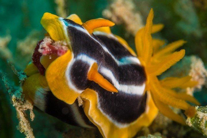 Nemo Dive Club & Hotel Pyama slak