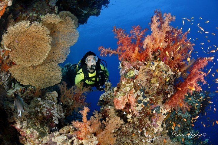 Camel Dive Club koraal - fotograaf Rinie Luykx