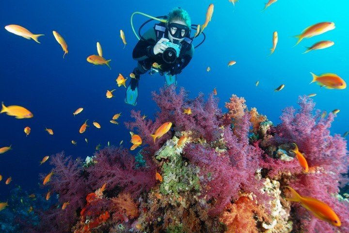 Camel Dive Club koraal