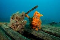 Diving NAD Lembeh