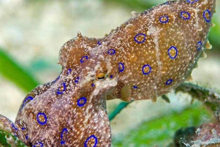 Onderwaterleven Magic Oceans