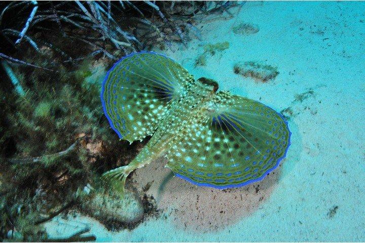 Maltaqua - onderwaterleven