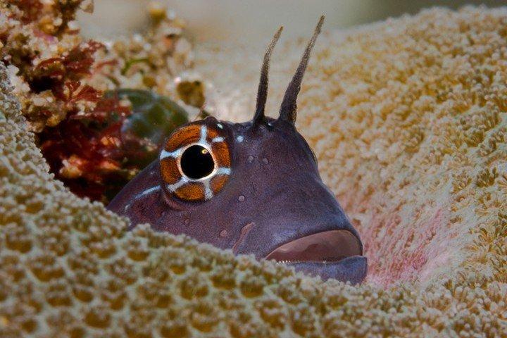 Duiken Oman - Extra Divers