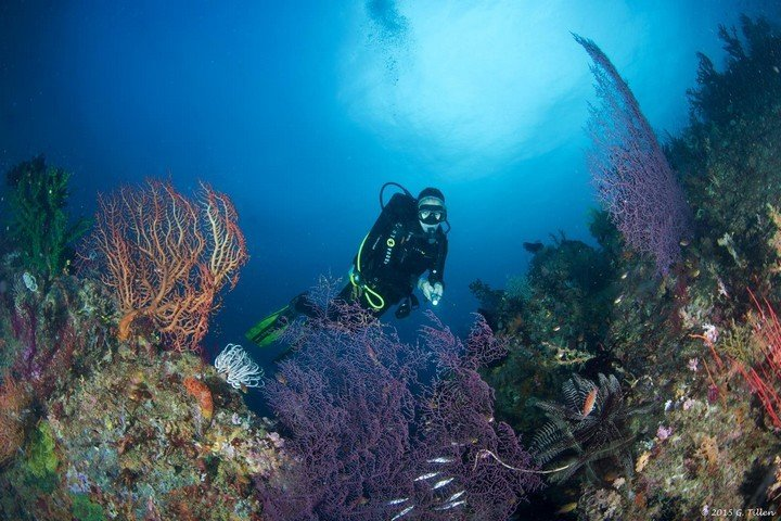 Triton Bay Divers - Dive and Travel