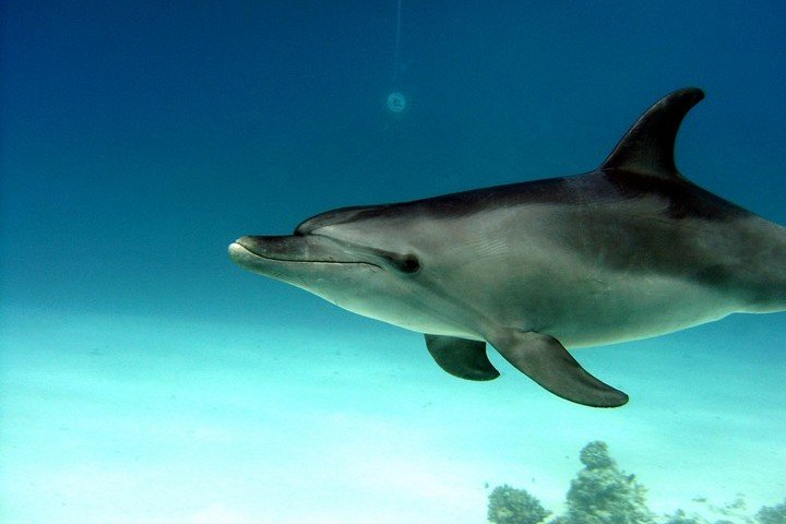 Longimanus - Dive and Travel