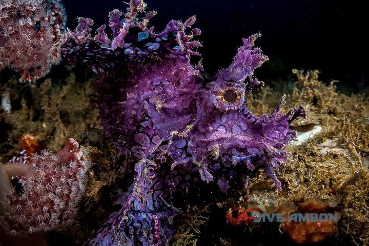 Maluku Resort & Spa - Dive Into Ambon