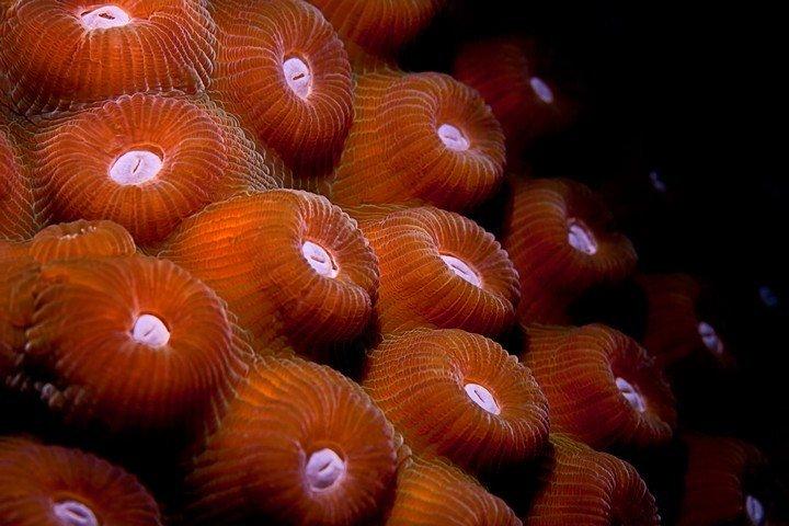 Koraal- Buddy Dive Resort