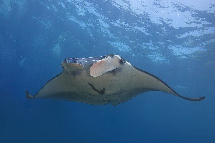 BigFish Diving - Manta Point Nusa Penida