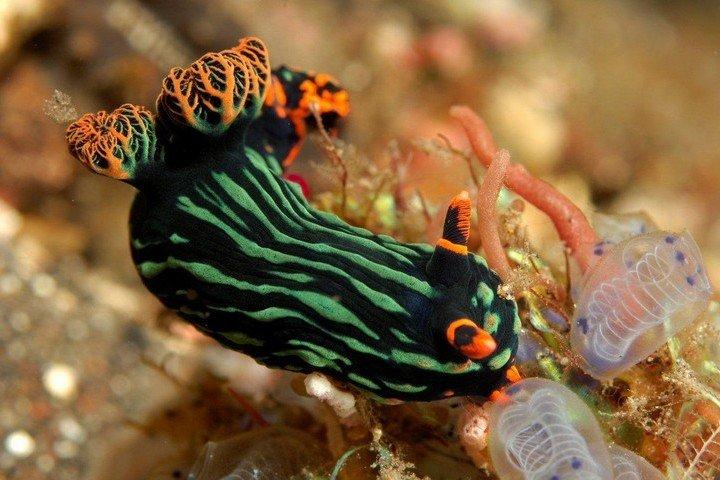 Kubu Indah Diving -