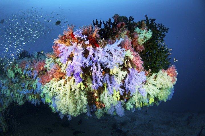 Amba Diving - Koraal