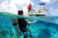 Ocean Encounters - Beginnen met duiken