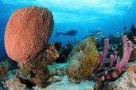 Ocean Encounters - Reefscene