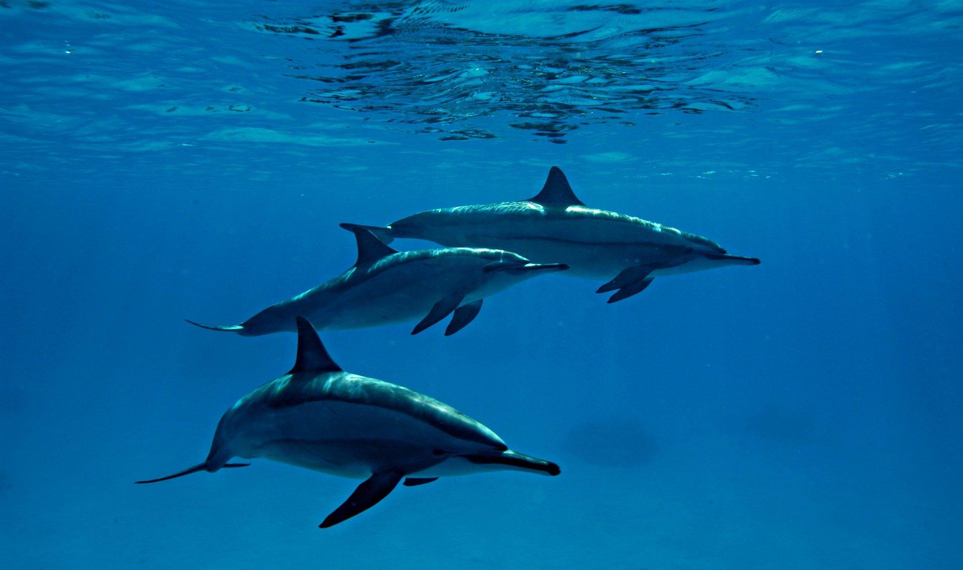 Dolfijnen - JP Bresser