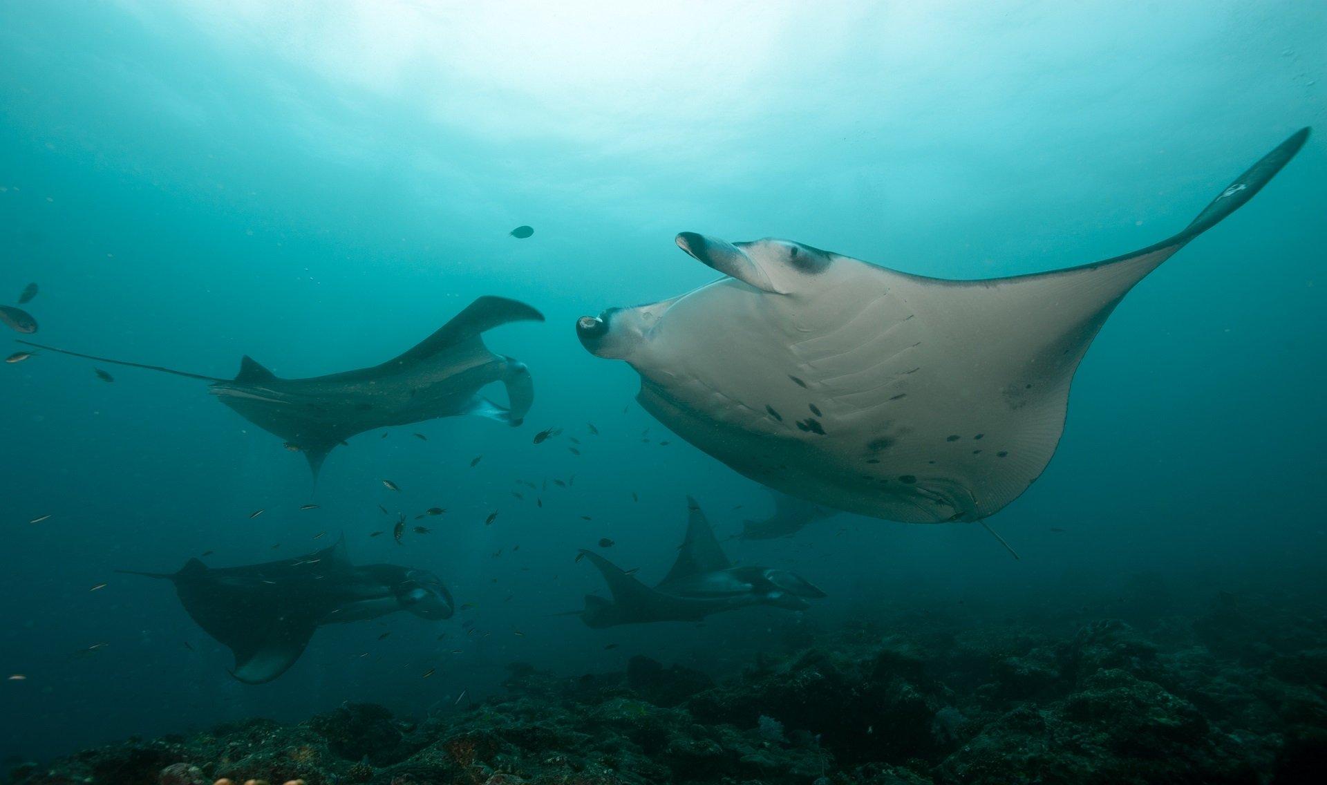 manta's Dive and Travel