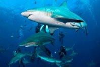 Zuid Afrika duikvakantie Dive and Travel
