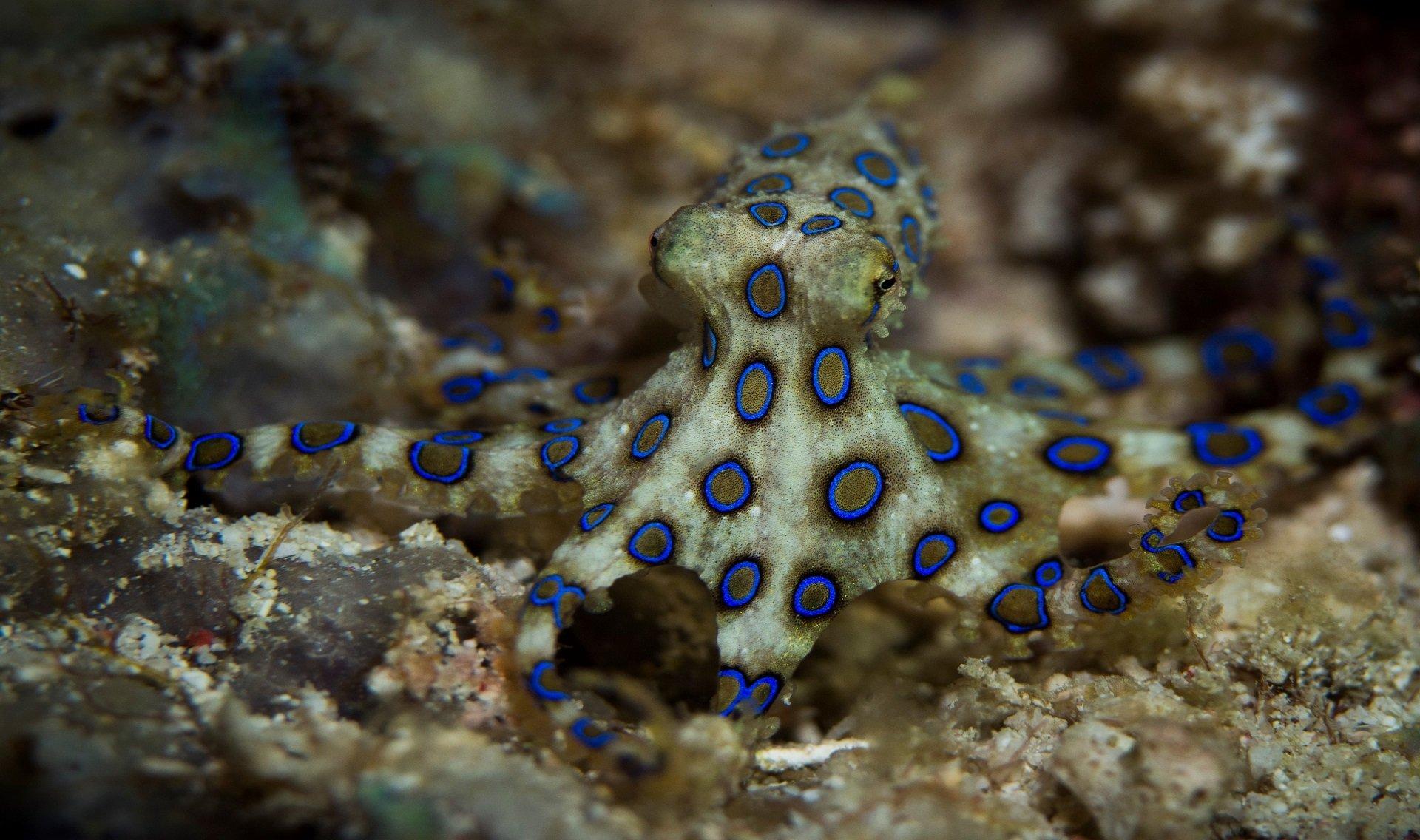 Magic Oceans Dive resort Filipijnen
