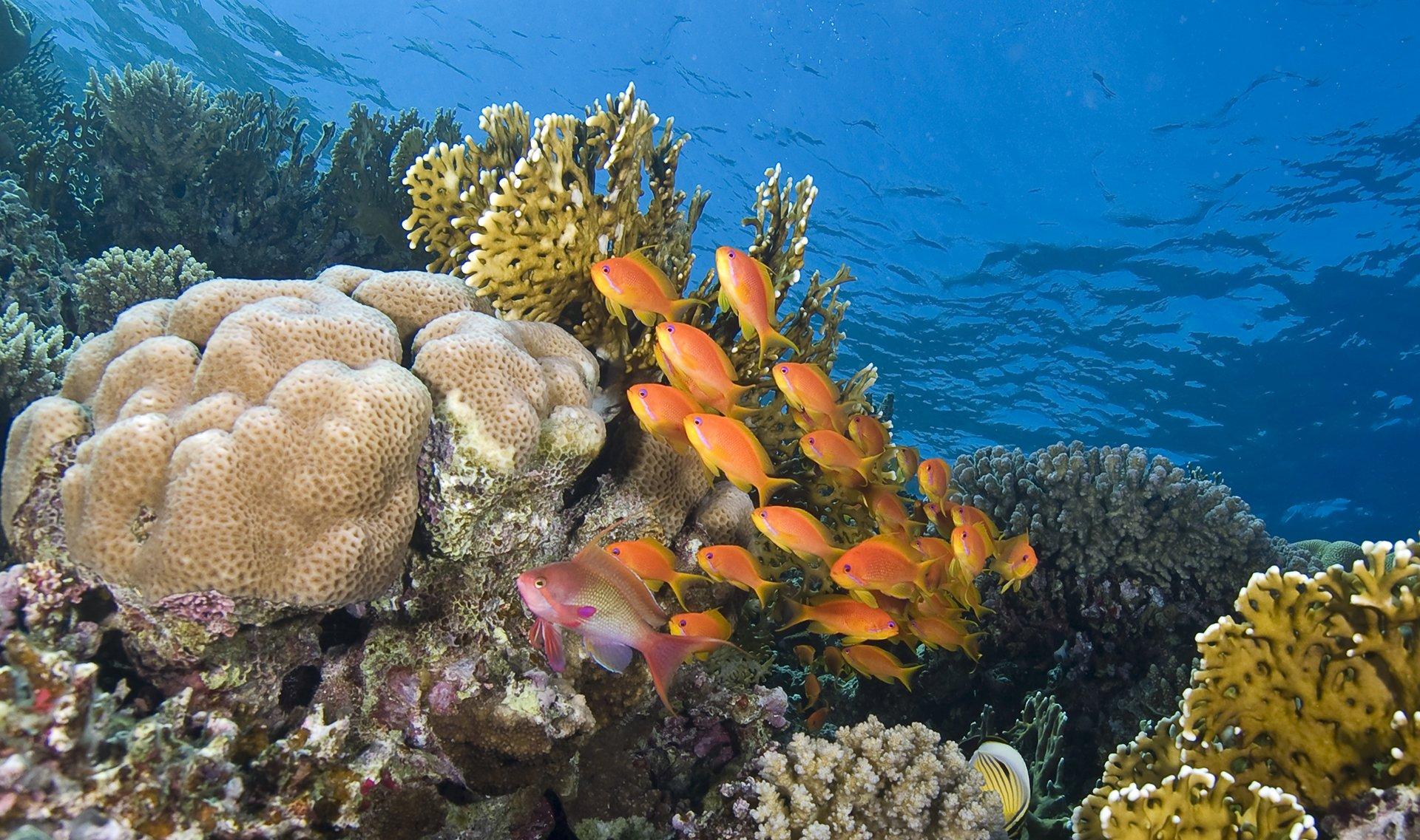 Photo Experience 2018 Red Sea Diving Safari