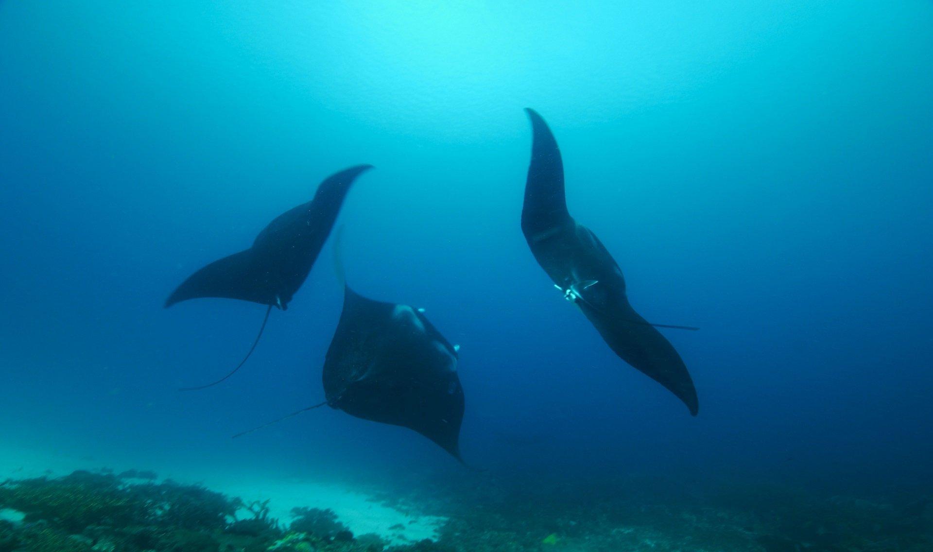 Komodo Indonsie