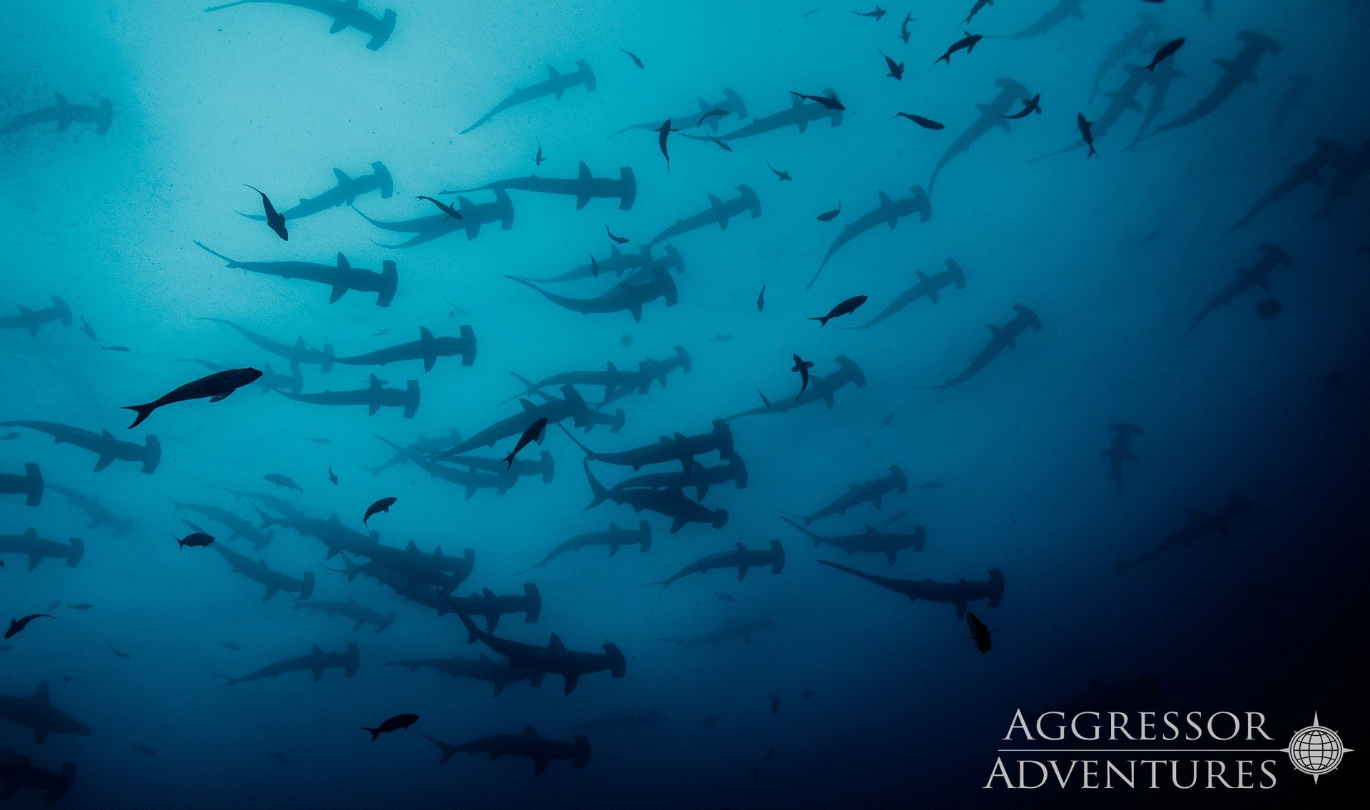 Diving Agressor I Cocos island