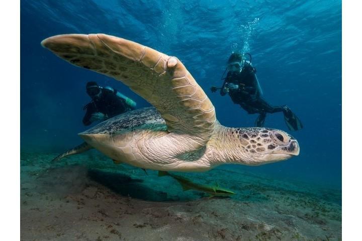 Coraya Divers duiker met schildpad