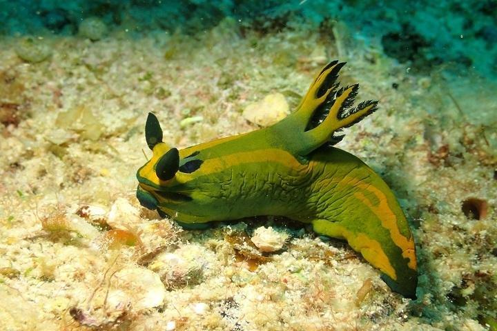 Ticao Island Resort duiken