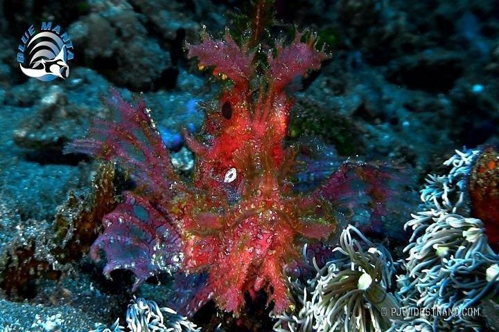 Blue Manta Liveaboard - onderwater