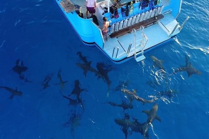 Haaien onder de boot