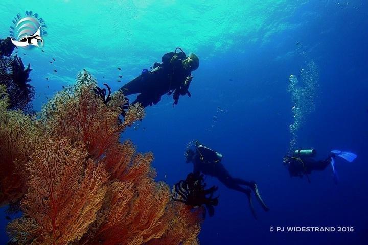 Blue Manta Liveaboard - duikers