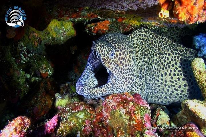 Blue Manta Liveaboard - eel